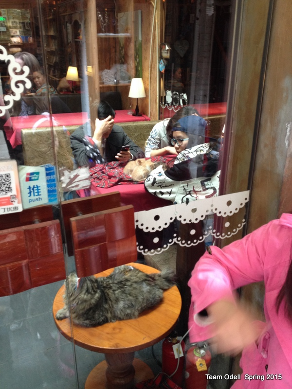 Cat restaurant.  Make of that what you will.